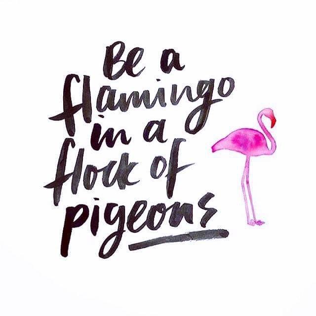 """Going out? """"Be a flamingo in a flock of pigeon"""" #standout #beoriginal #staytrue"""